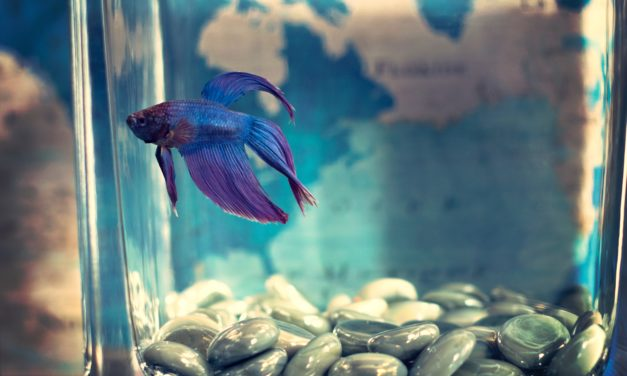 Fish are friends, not party favors