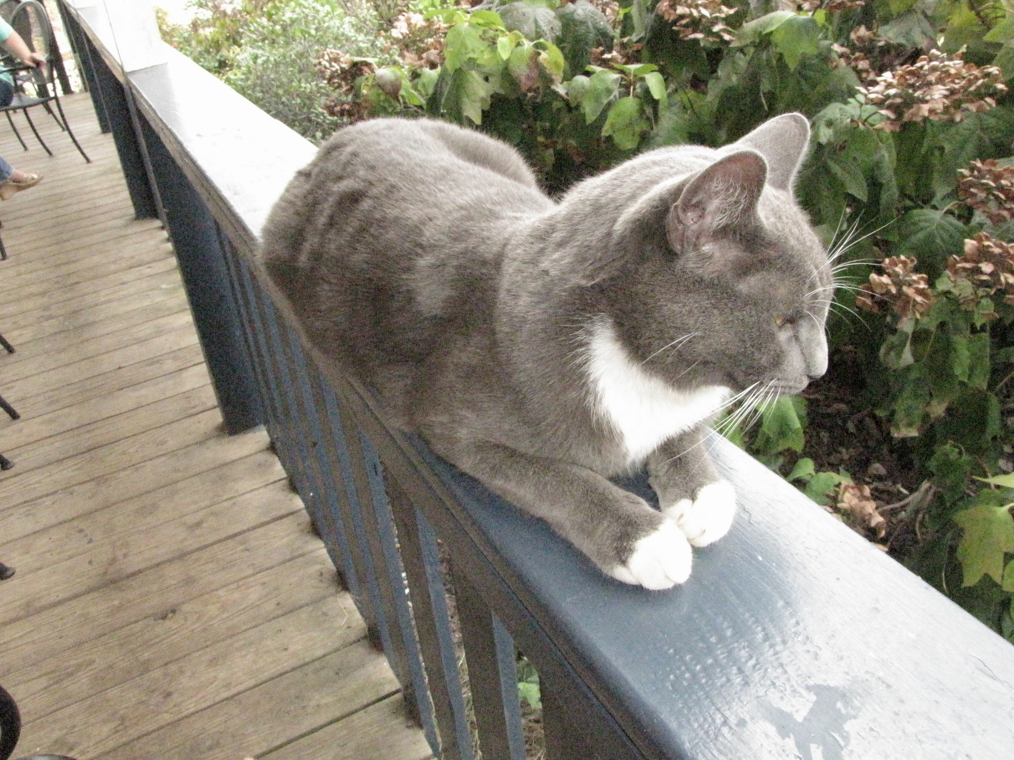 Eclipse cat: Sillyhead